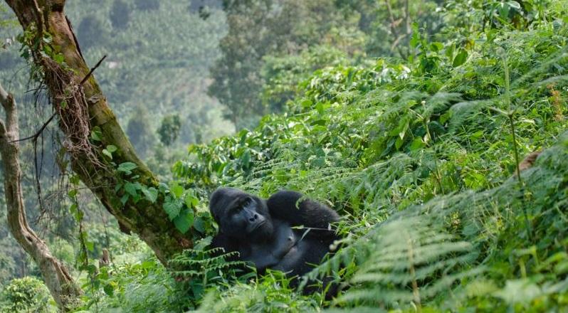 Vypravte se do země, kterou turisté ještě neobjevili. Nádherná Rwanda za 11690 Kč s odletem z Vídně