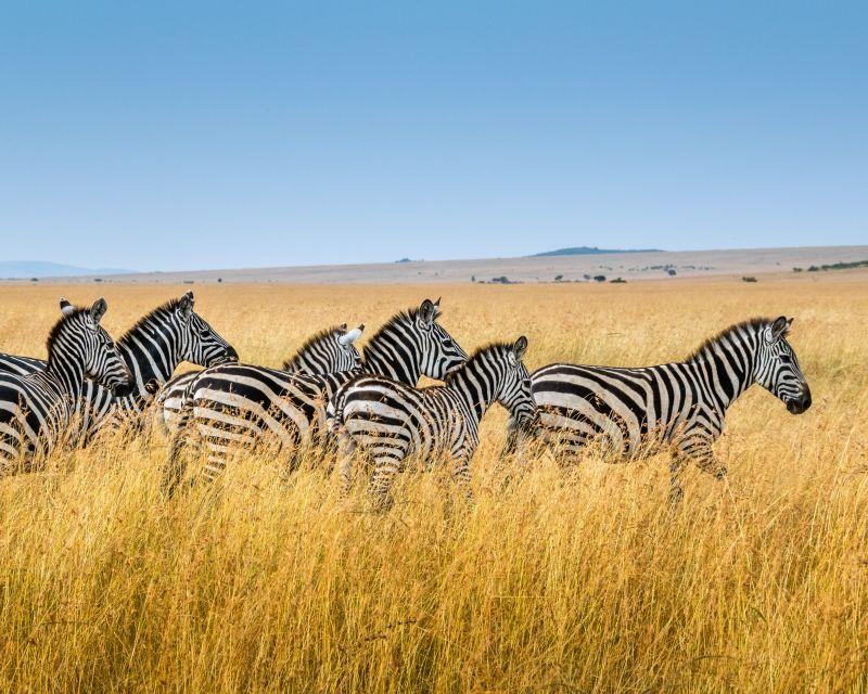 Safari v Keni s velkým kufrem! Letenky do Nairobi od 10390 Kč s odletem z Prahy