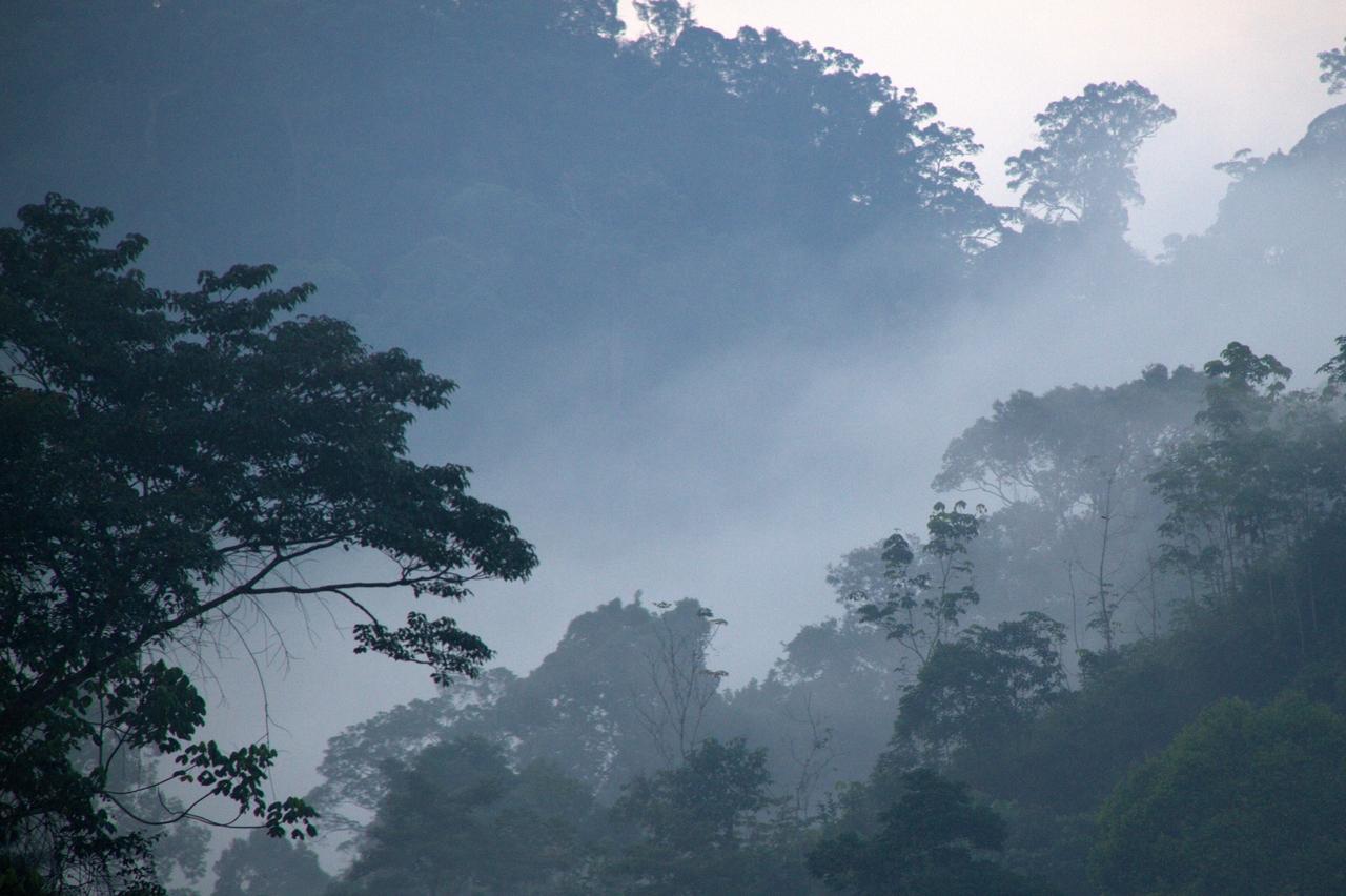Krása deštných lesů se nedá popsat, musí se zažít